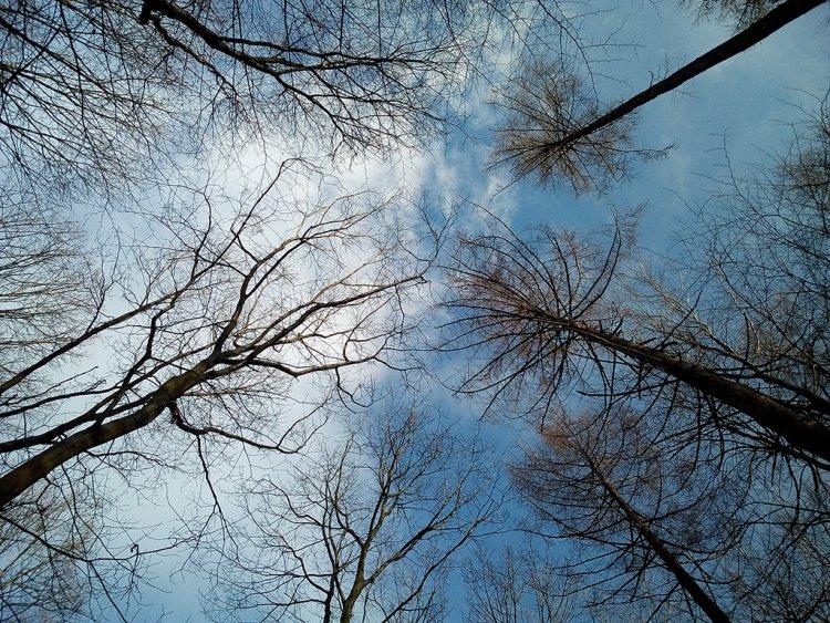Achtsame Begleitung - Mein Weg der Eigenbetreuung