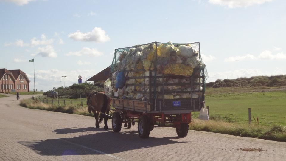 In Neuseeland als Christkind den Müll trennen