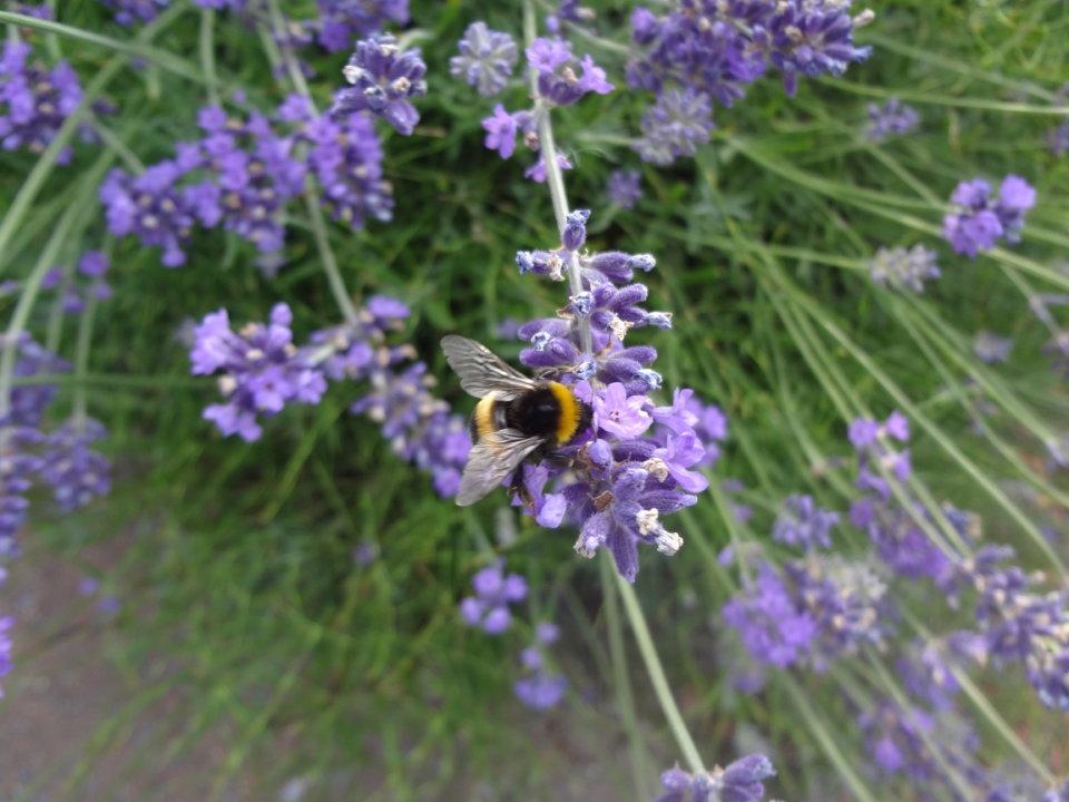 Der 1. Aufklärungsversuch: Bienchen und Blümchen oder nackte Tatsachen?