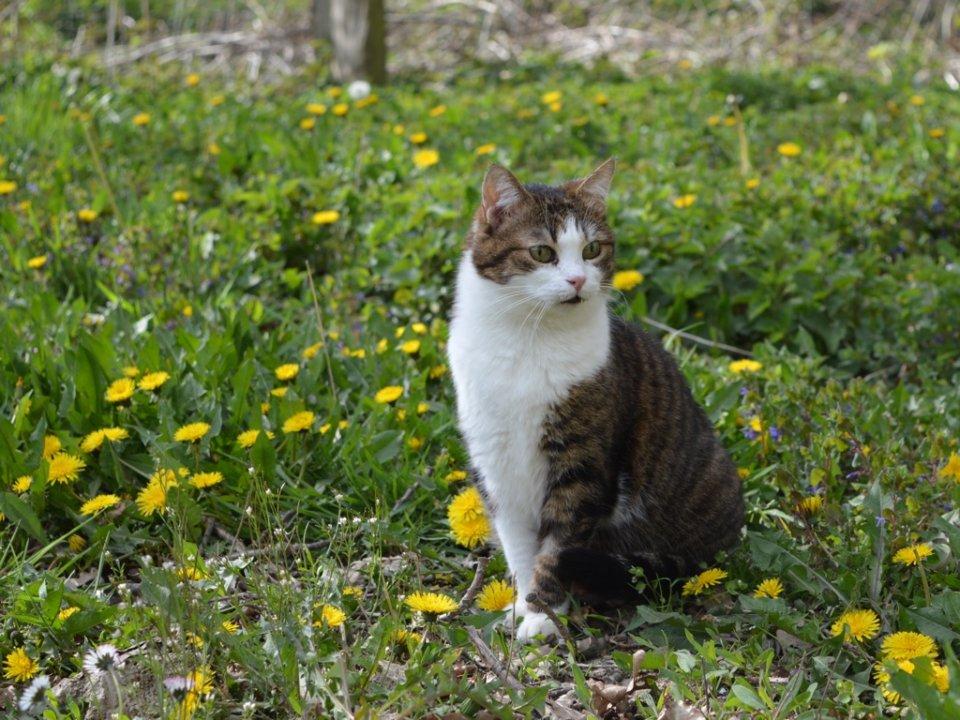 Elli, die Pusteblumen-Katze