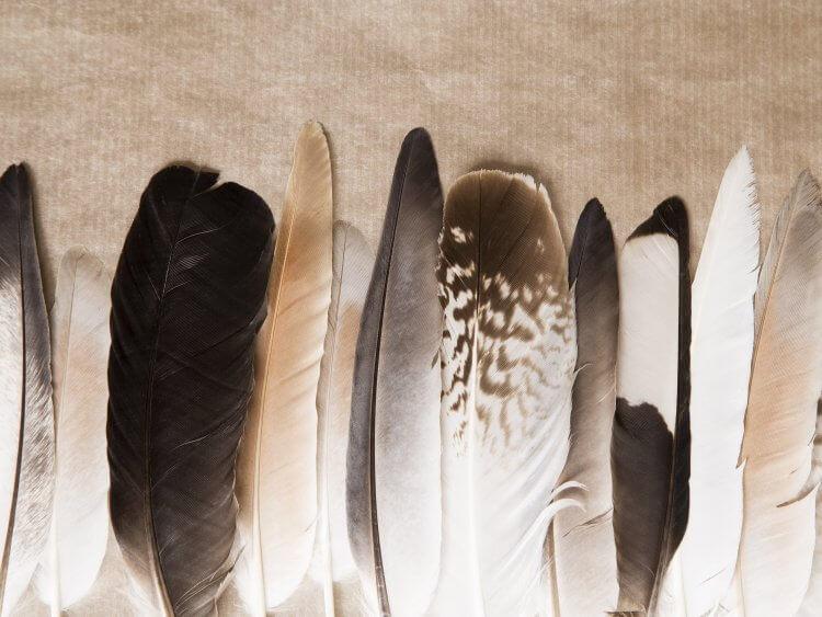 Die gestutzten Flügel