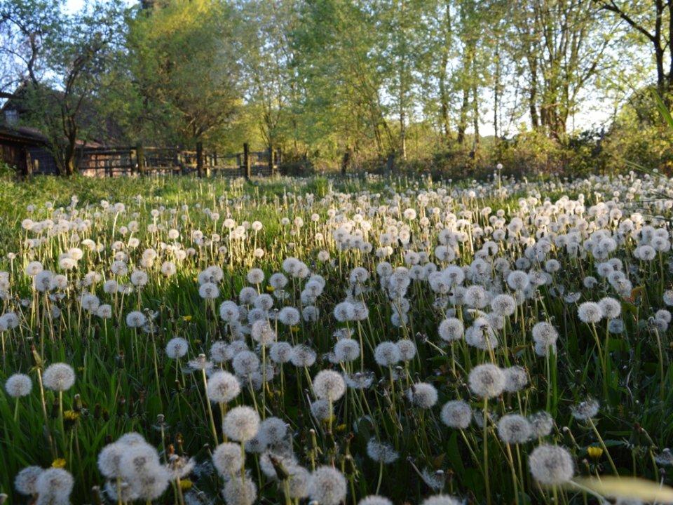 Vom Hobby zur Berufung: Mein neuer Job im Pusteblumengarten